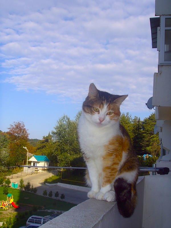 Серо-белый кот залез через балкон сон