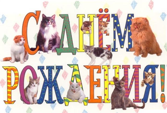 Оригинальное поздравление с днем рождения кота